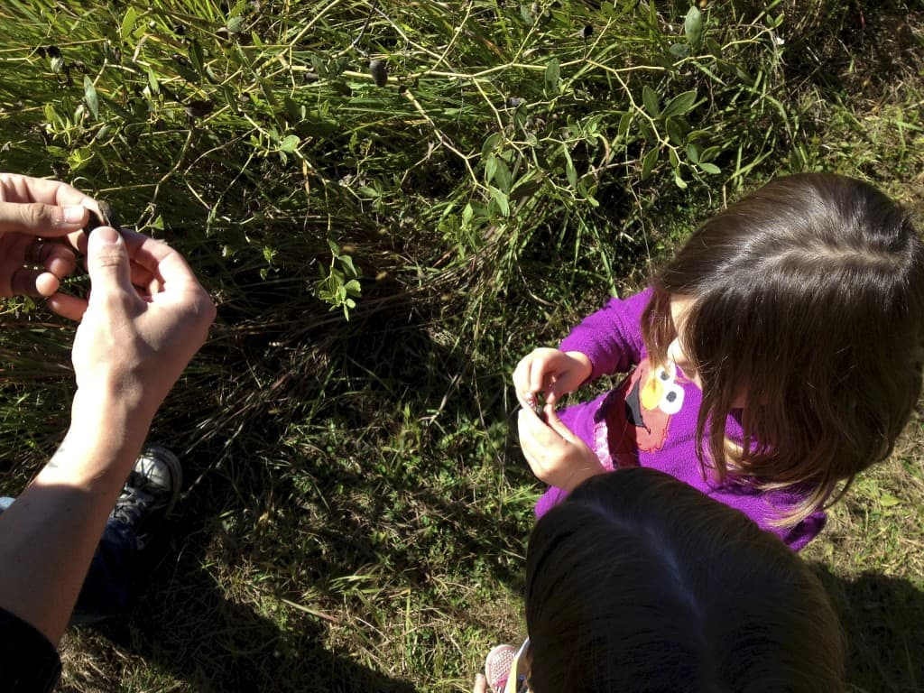 kids examining seed pods