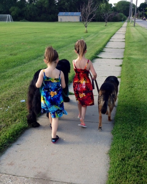 2 sisters each walking a dog. One is walking a newfoundland and the other is walking a German Shepherd mis.