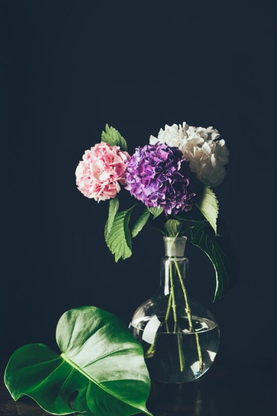 flowers in a vase in front of a black background