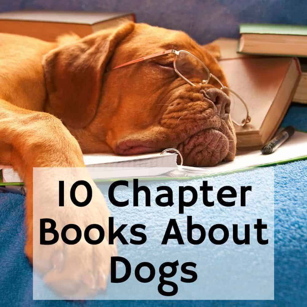 "dog with glasses on  laying on a pile of books. Title image of blog post ""10 Chapter Books about Dogs"""