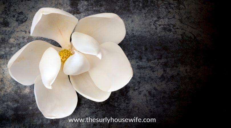magnolia flower on dark slate top view