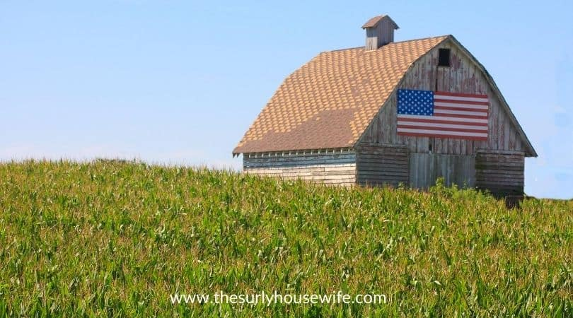 Rustic barn in an Iowa cornfield. Title image of blog post 20 children's books about Iowa