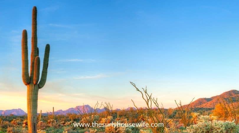 Saguaro cactus in Sonoran Desert catching days last rays.